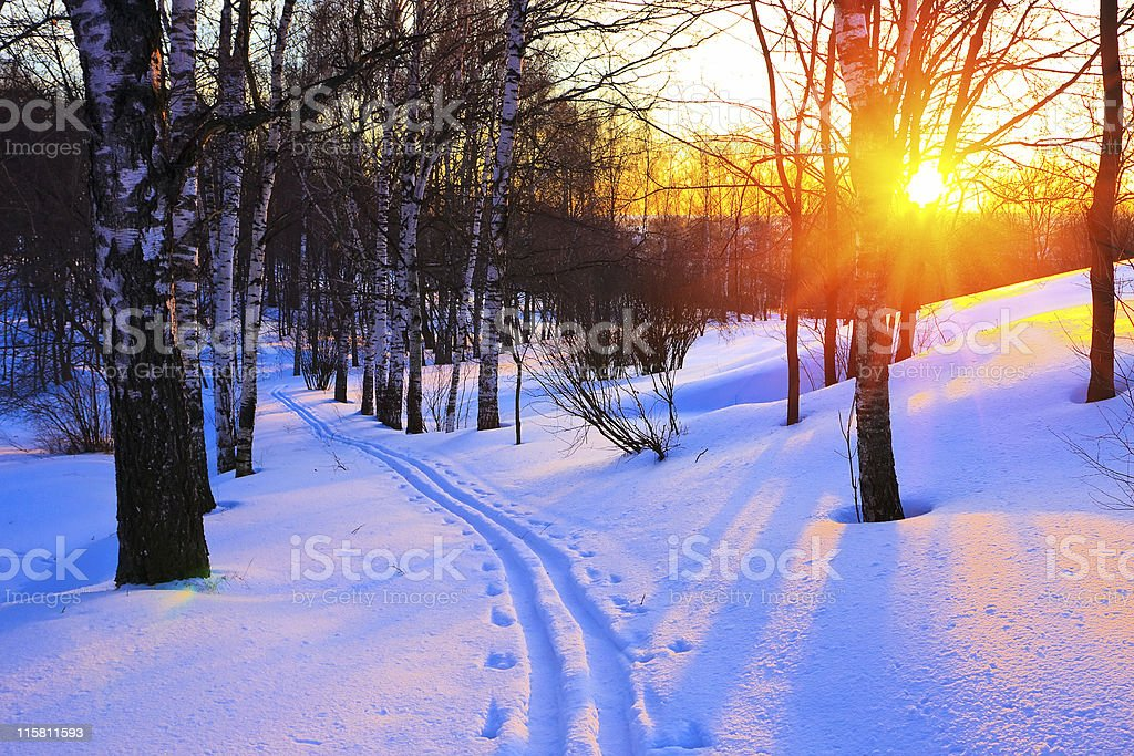Tracks through snow in a woodland area at sunset stock photo