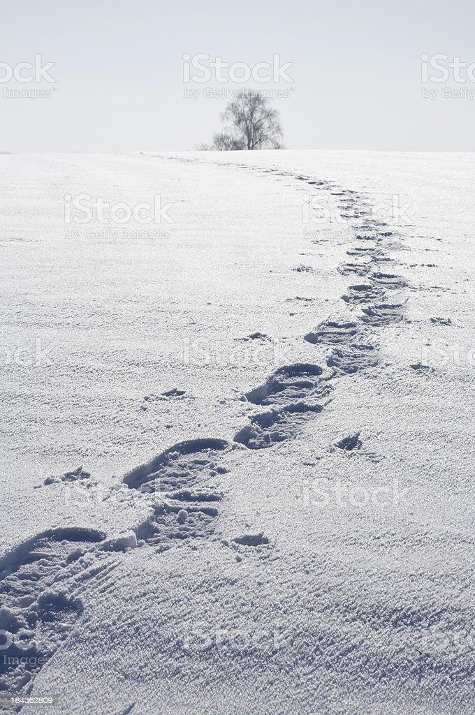 Tracks to the horizon, stock photo