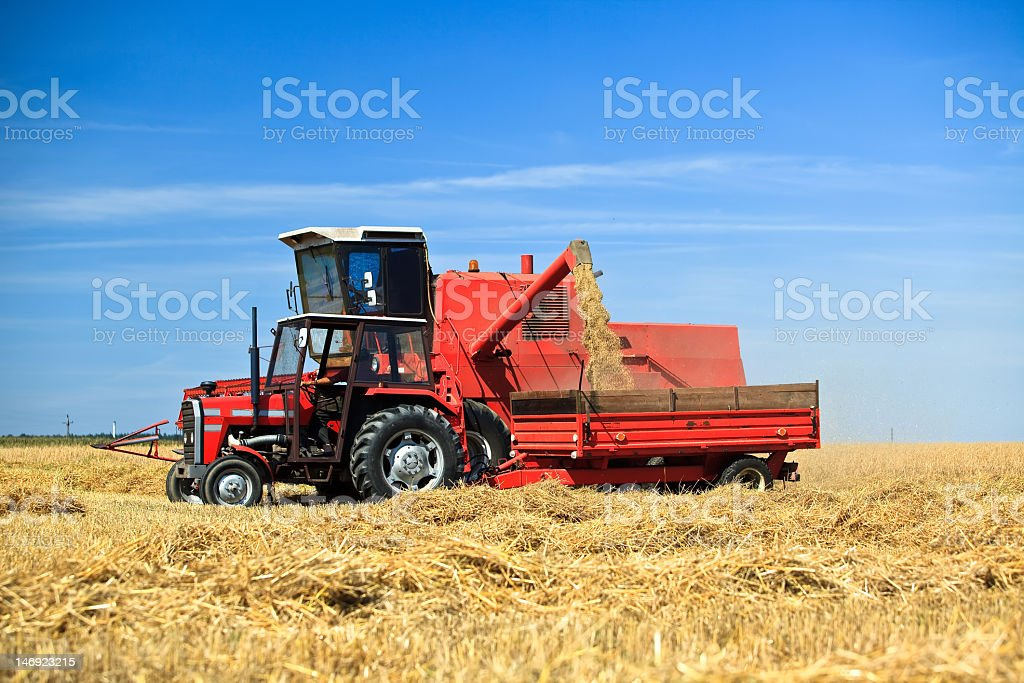 Tractor and combine harvesting wheat royalty-free stock photo