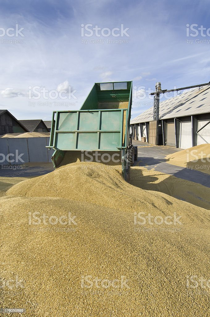 Tractor and Trailer Delivering Grain To the Depot. stock photo
