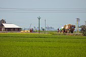 Tractor carrying food grains and people walking in front