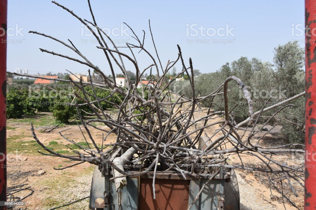 Tractor cart full of branches stock photo
