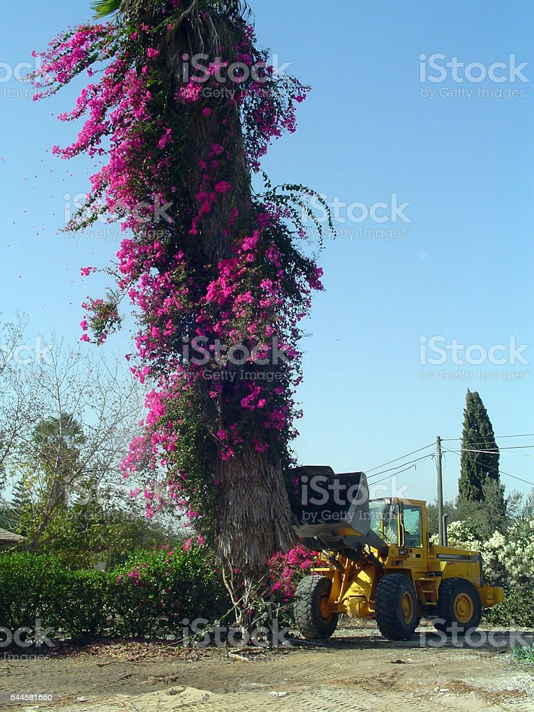 Tractor caught Pushing a tree stock photo