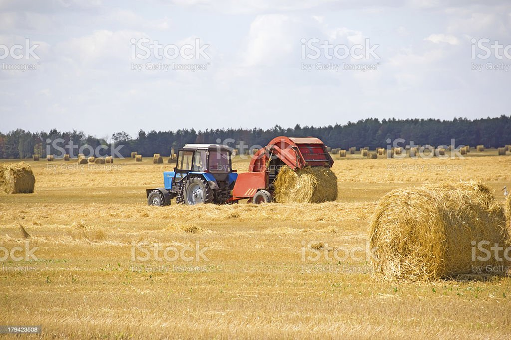 tractor collects grass in straw bales royalty-free stock photo