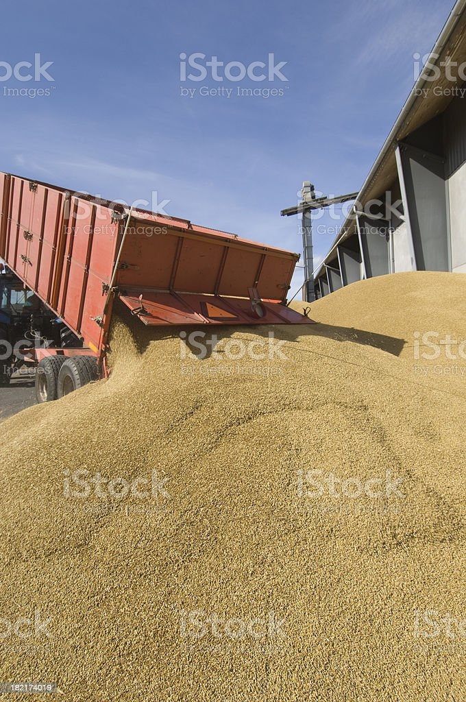 Tractor Delivering a Load to the Grain Depot stock photo