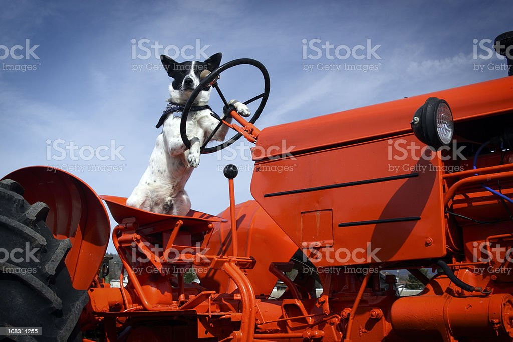 Tractor dog stock photo