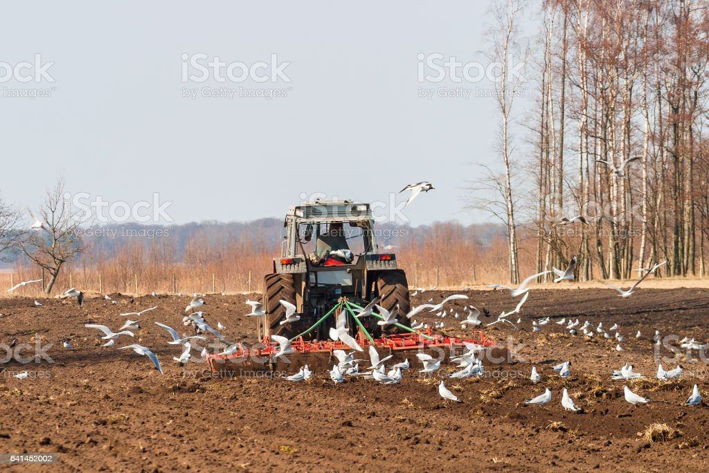 Tractor harrows on a field stock photo