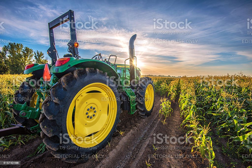 Tractor In A Corn Field At Sunrise stock photo