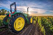 Tractor In A Corn Field At Sunrise