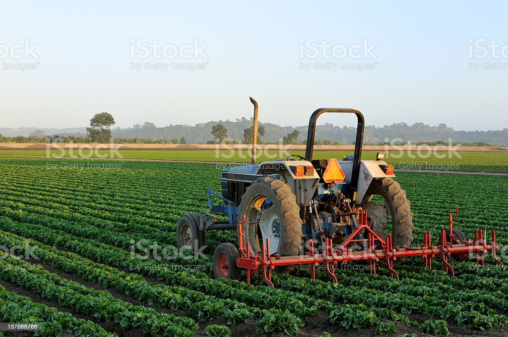 Tractor in a Vegetable Field royalty-free stock photo
