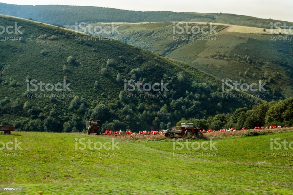 tractor in the fields for harvesting potatoes with mountains backgrounds stock photo