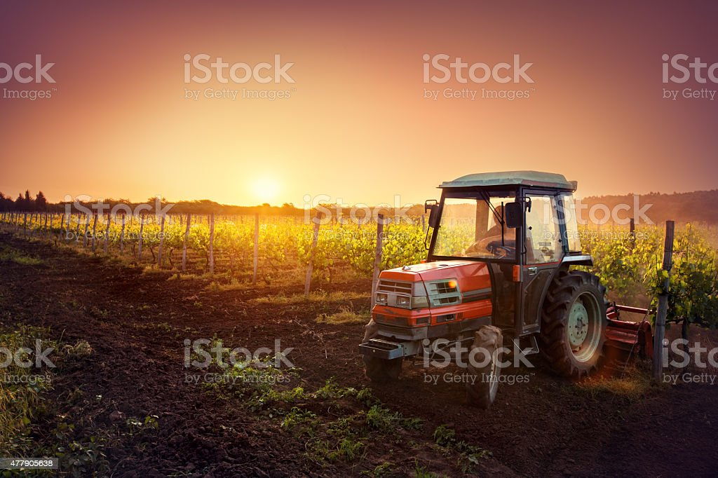 Tractor in the vineyard at sunset stock photo