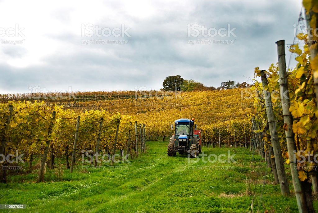 Tractor in the Vineyard royalty-free stock photo