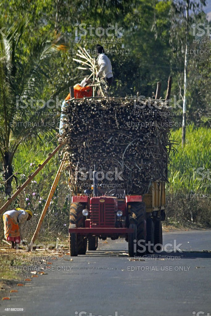 Tractor laded with bundles of sugarcanes , Satara, Maharashtra , stock photo