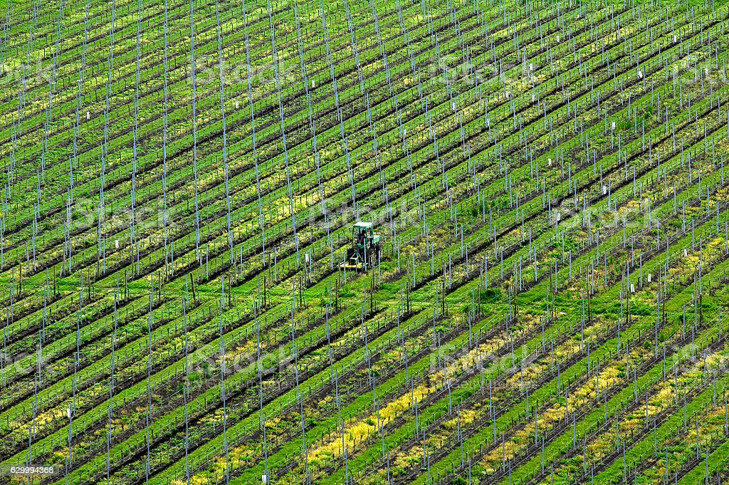 Tractor on the vineyard, Aerial View stock photo