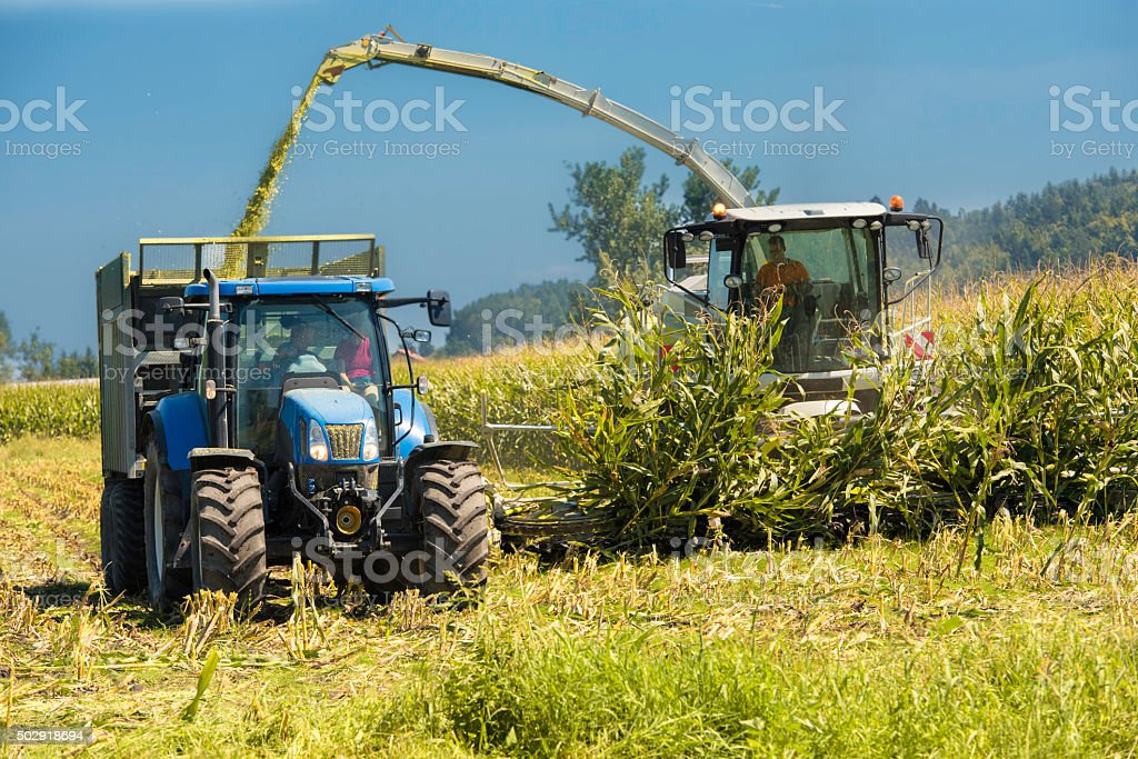 Tractor receiving corn from a combine harvester on a field stock photo