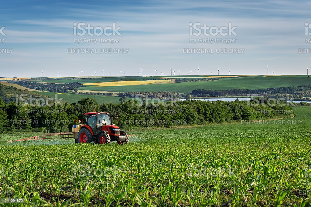 Tractor spraying corn field with sprayer during sunset. stock photo