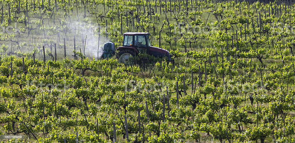 Tractor spraying insecticide on vineyards royalty-free stock photo