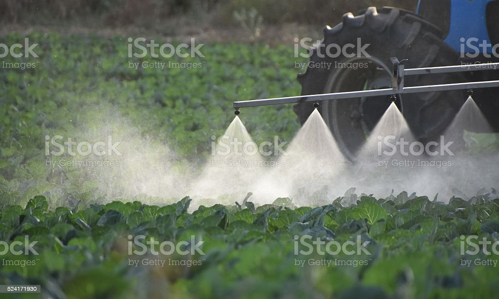 Tractor spraying the green agricultural field stock photo