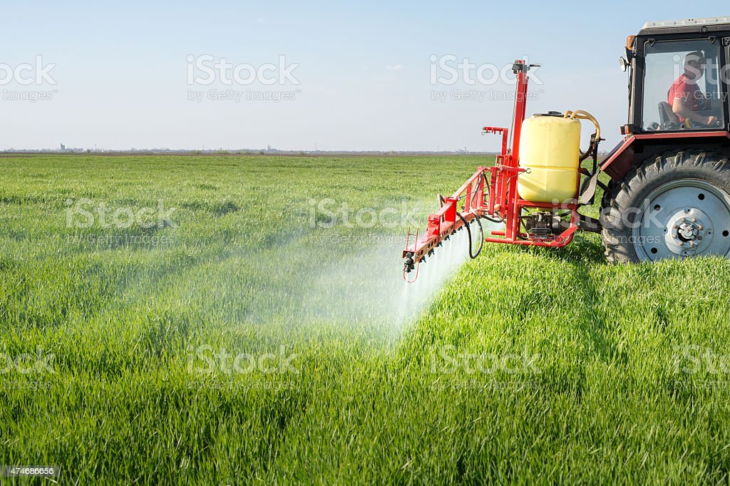 Tractor spraying wheat field stock photo
