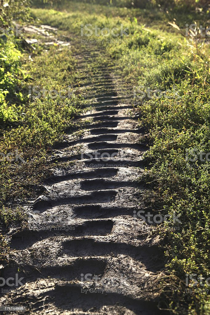 Tractor Tire Tracks royalty-free stock photo
