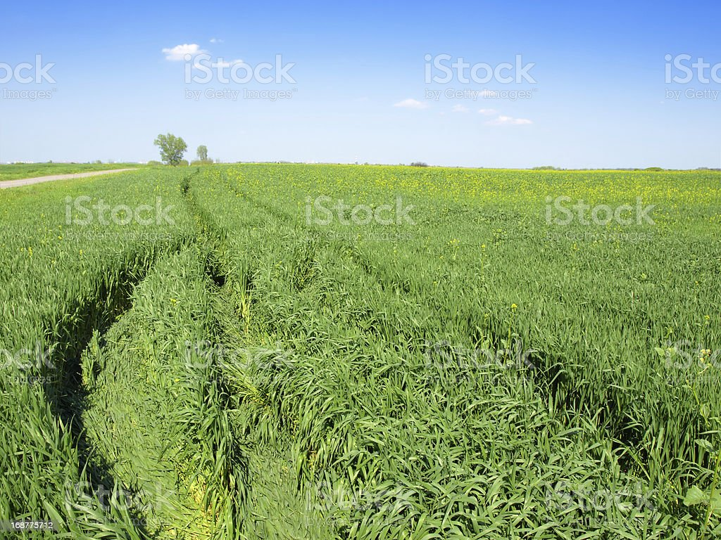 Tractor Tracks through Field Landscape in Spring royalty-free stock photo
