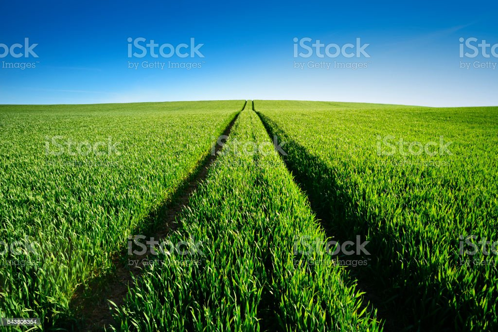 Tractor Tracks through Green Spring Field Landscape under Blue Sky stock photo