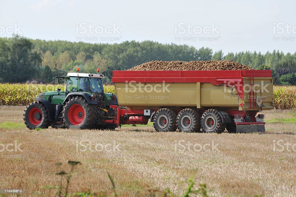 Tractor with container loaded with potatoes,Flanders,Belgium. royalty-free stock photo