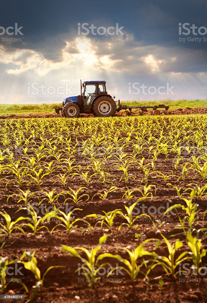 Tractor working on the field in sunlight stock photo