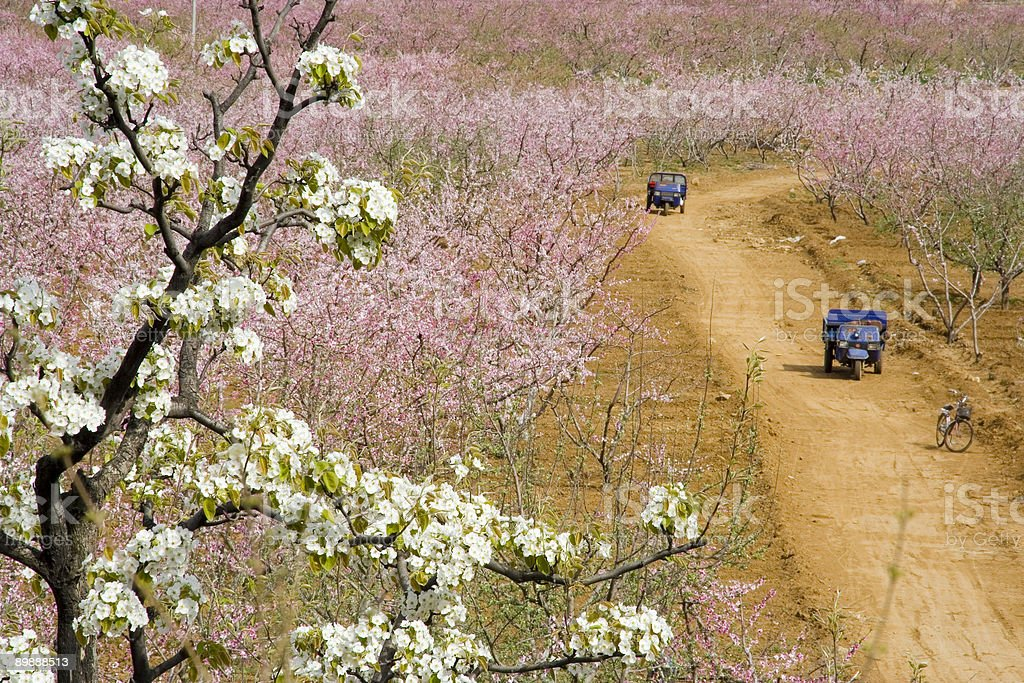 Tractors and hurst of peach blossom royalty-free stock photo