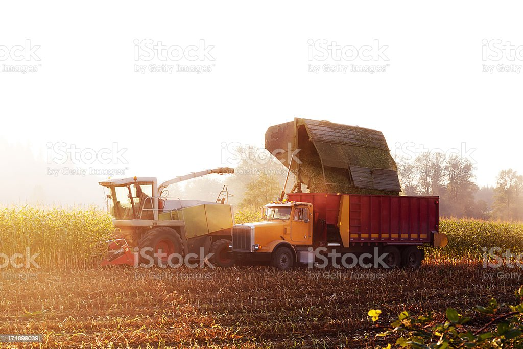 Tractors harvesting from a corn farm at sunset stock photo