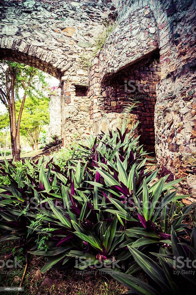 Tradescantia Among the Ruins stock photo