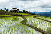 Traditional agriculture in Cheing Mai, Northern Thailand.