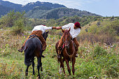 Traditional arm wrestling on horses of Kazakhstan