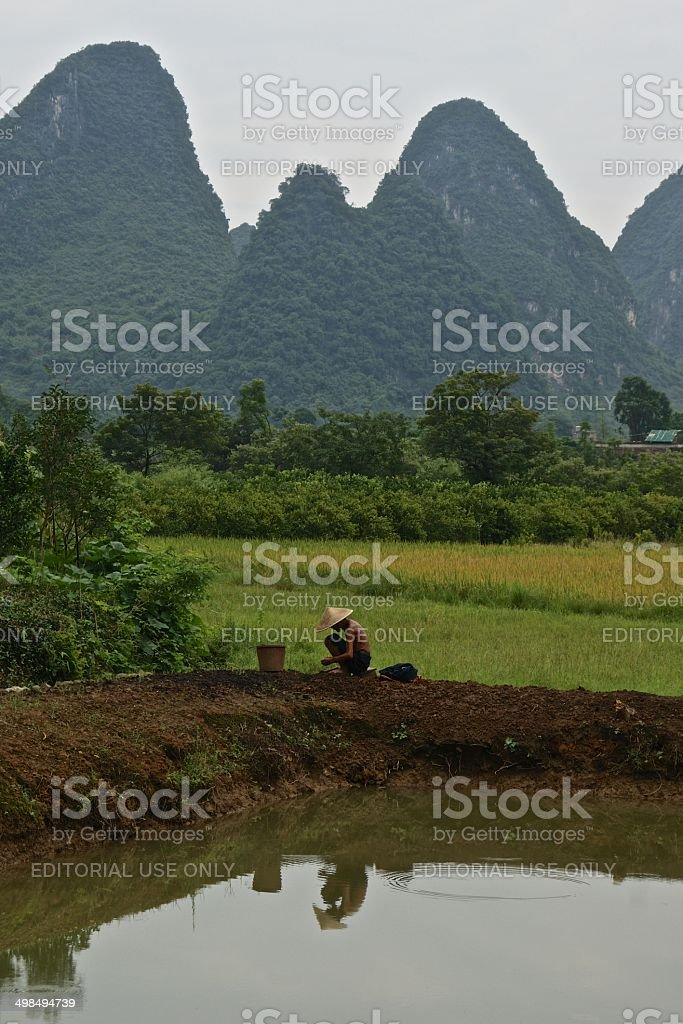 Traditional Chinese farmer in the paddy fields around Yanghou royalty-free stock photo