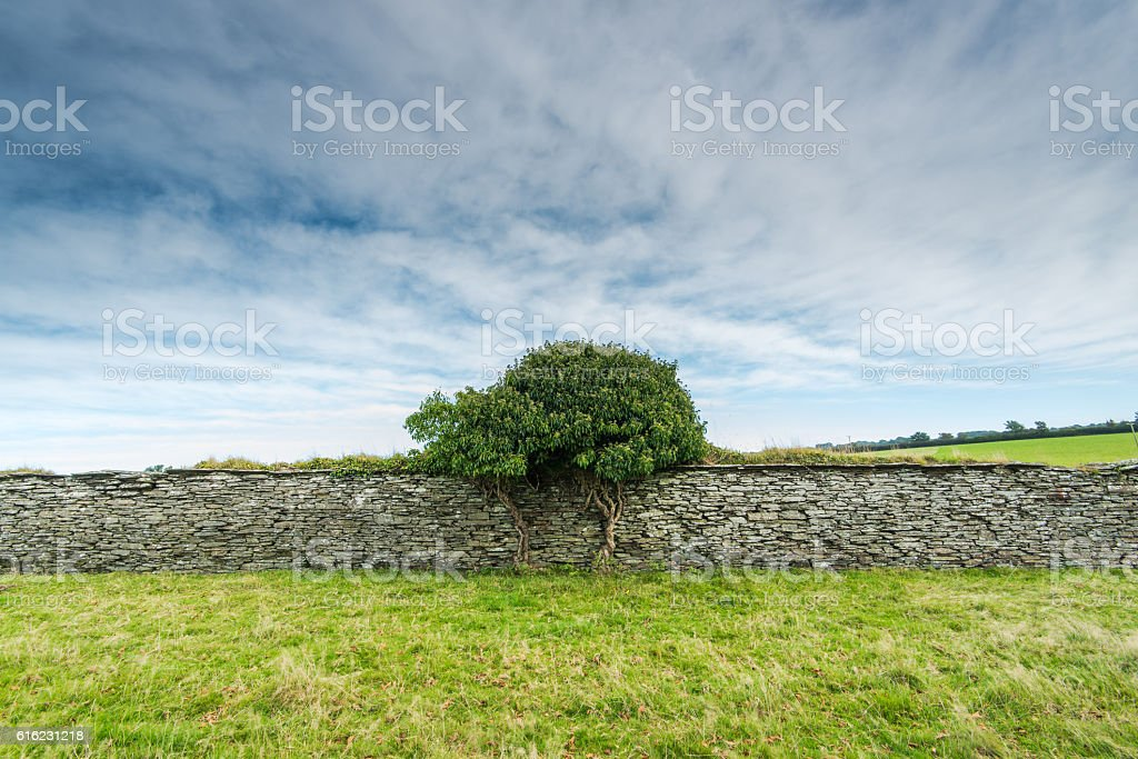 traditional dry stone wall in Devon, UK stock photo