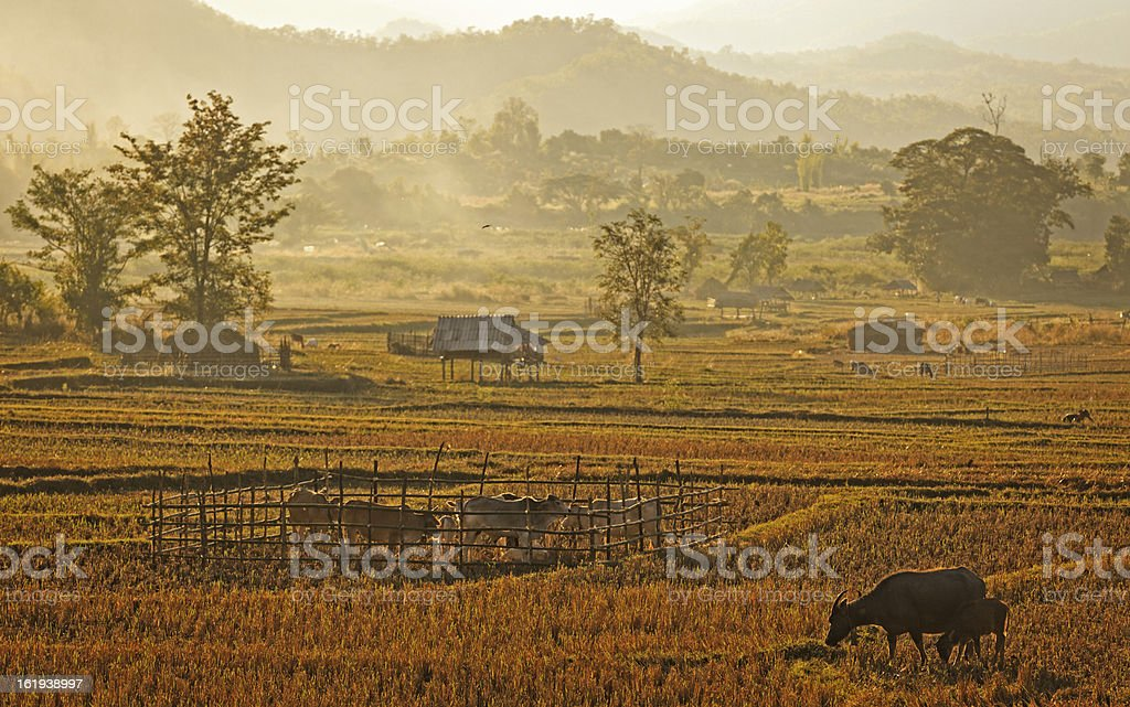 Traditional farm in nort of Thailand stock photo
