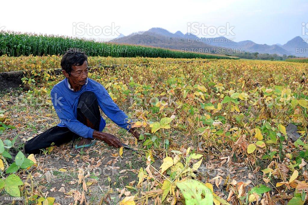 Traditional farmer stock photo