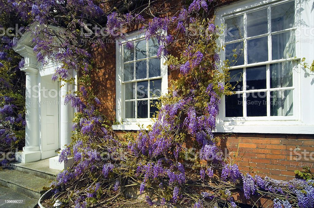 Traditional Georgian house front with Wisteria stock photo