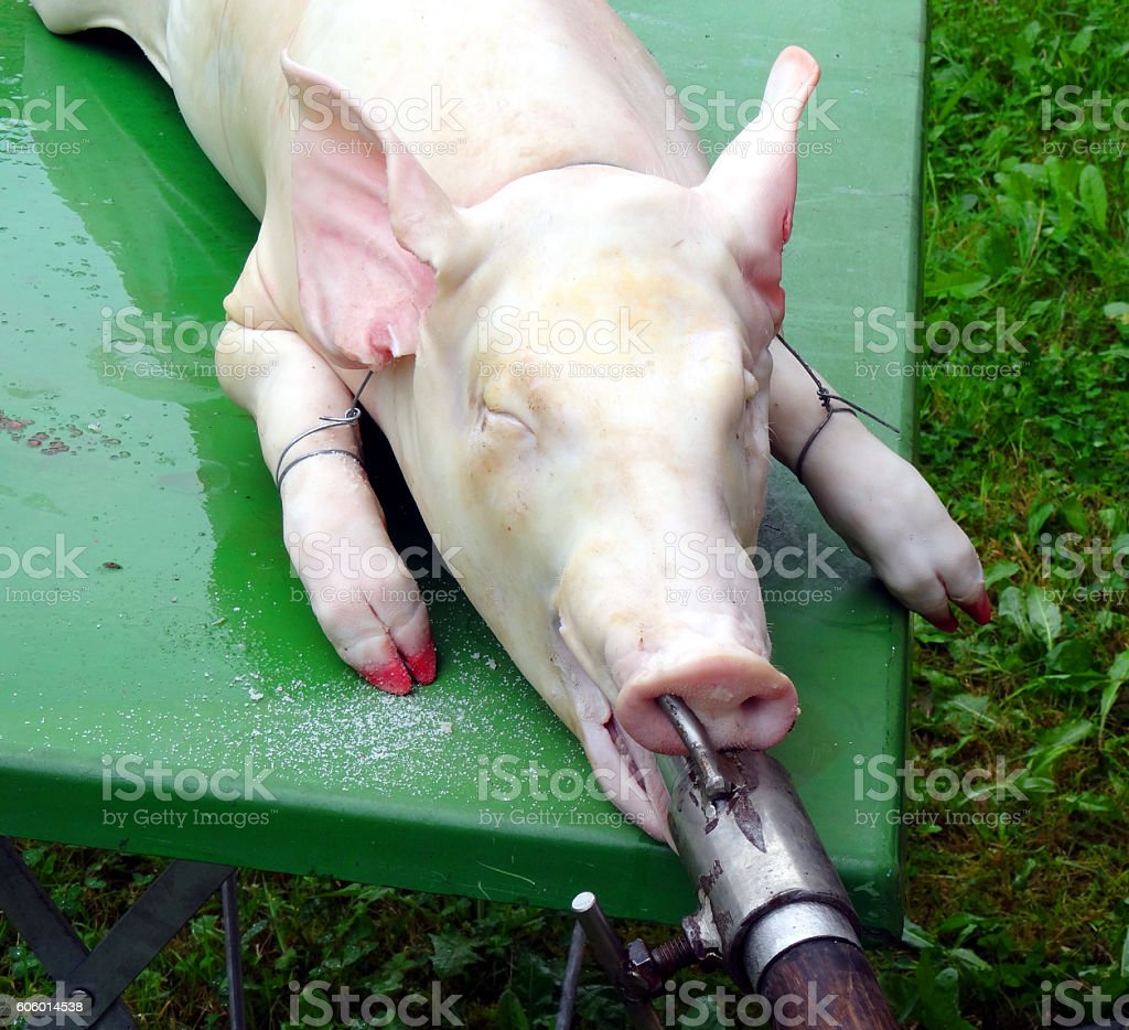 Traditional home made pig slauhtering stock photo