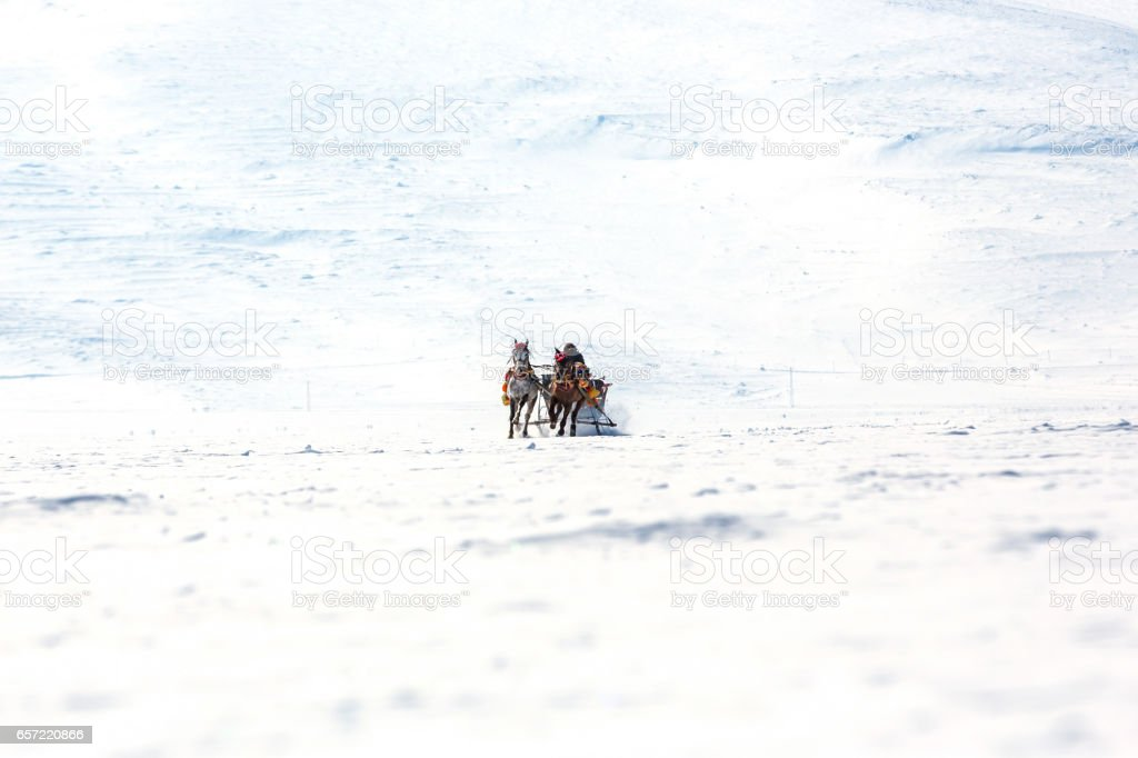 Traditional horse transport with sleigh stock photo