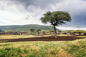 Traditional houses in the village in Masai Mara, Kenya