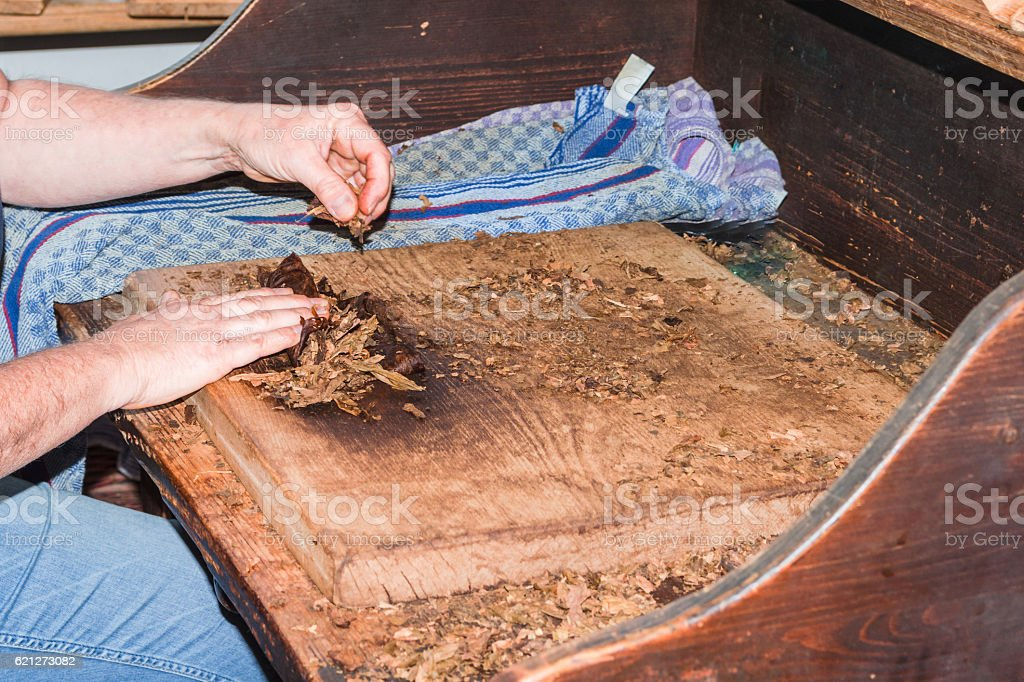 Traditional manufacture of cigars stock photo