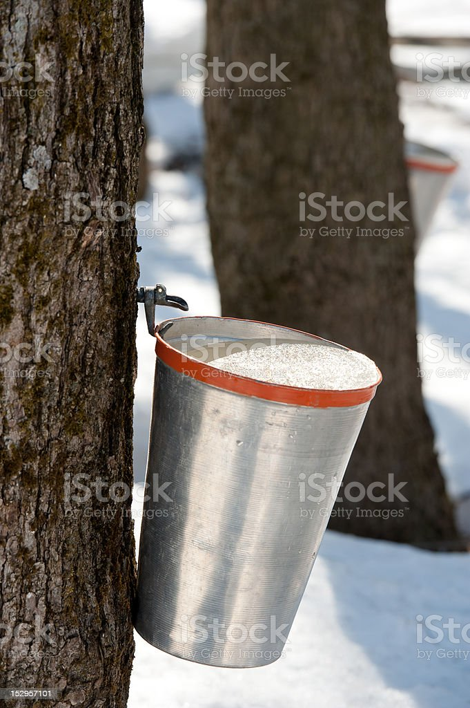 Traditional maple syrup stock photo