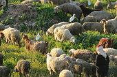 Traditional Shepherd