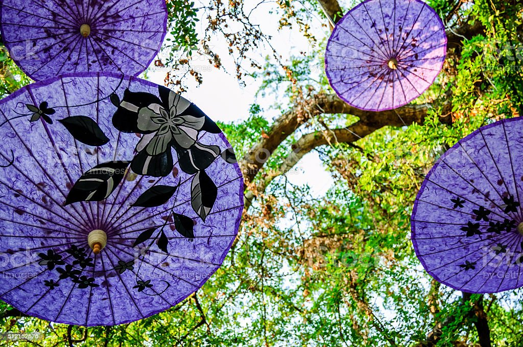 Traditional Thai parasols in tree stock photo