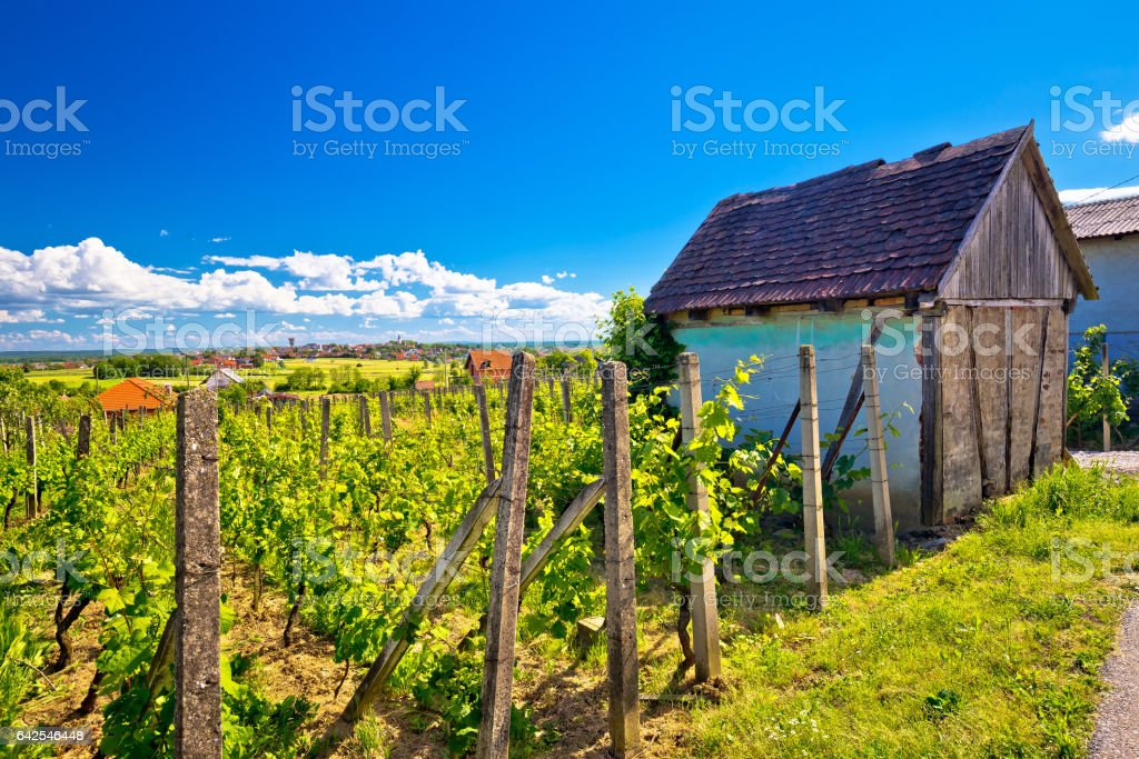 Traditional vineyard and cottage in Vrbovec, Prigorje region of Croatia stock photo