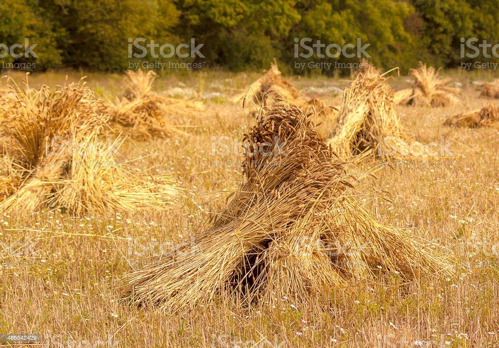 Traditional wheatsheaves stock photo