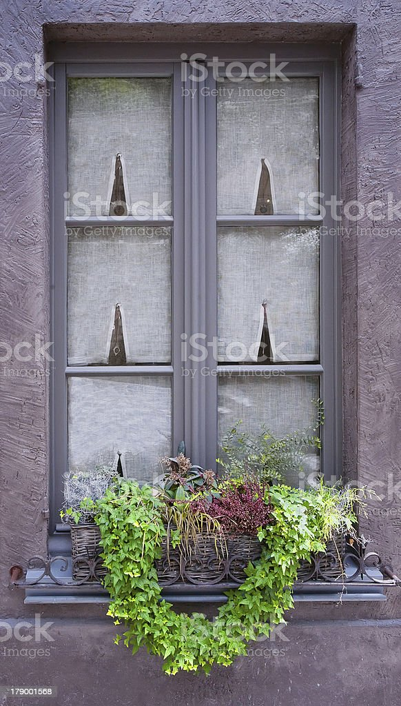 Traditional window with green plants. Belgium royalty-free stock photo
