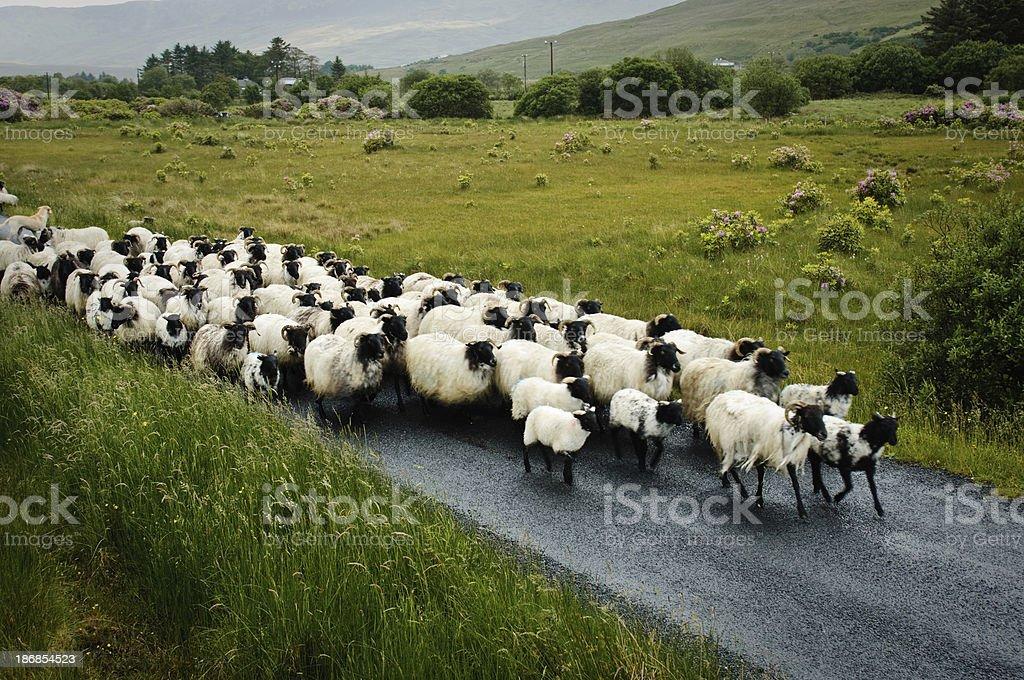 Traffic jam in rural Ireland stock photo